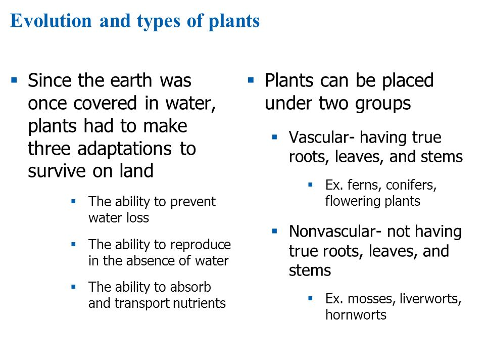 Evolution and types of plants