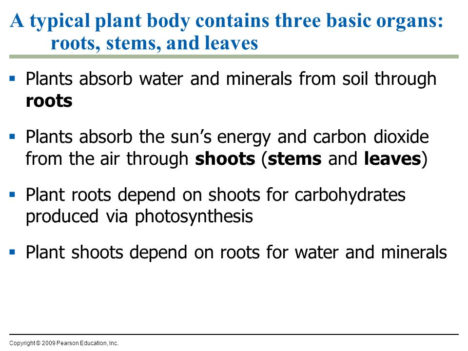 A typical plant body contains three basic organs: roots, stems, and leaves