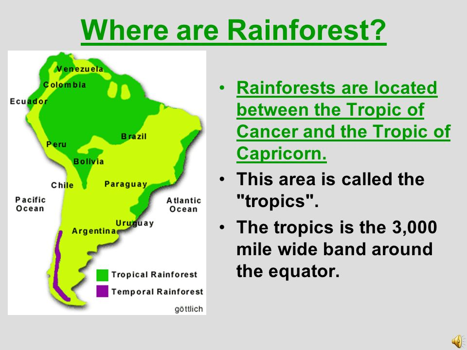 Where are Rainforest Rainforests are located between the Tropic of Cancer and the Tropic of Capricorn.