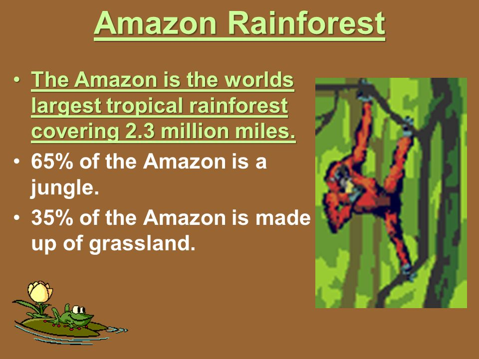 Amazon Rainforest The Amazon is the worlds largest tropical rainforest covering 2.3 million miles. 65% of the Amazon is a jungle.
