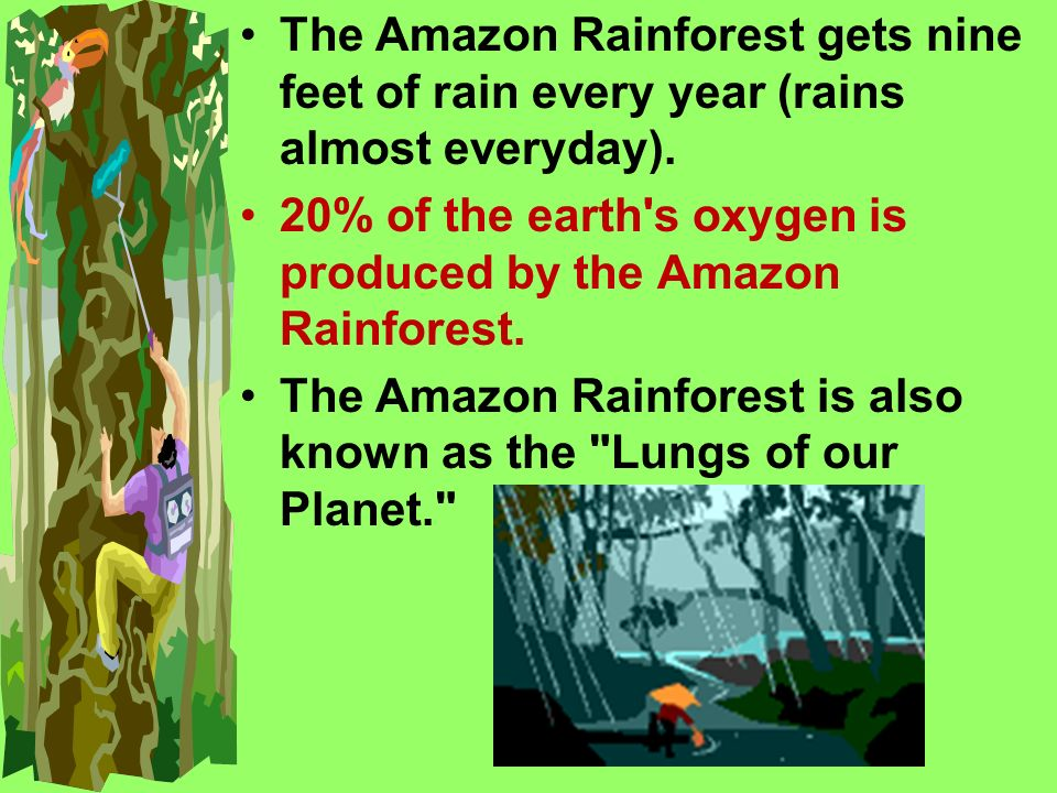 The Amazon Rainforest gets nine feet of rain every year (rains almost everyday).