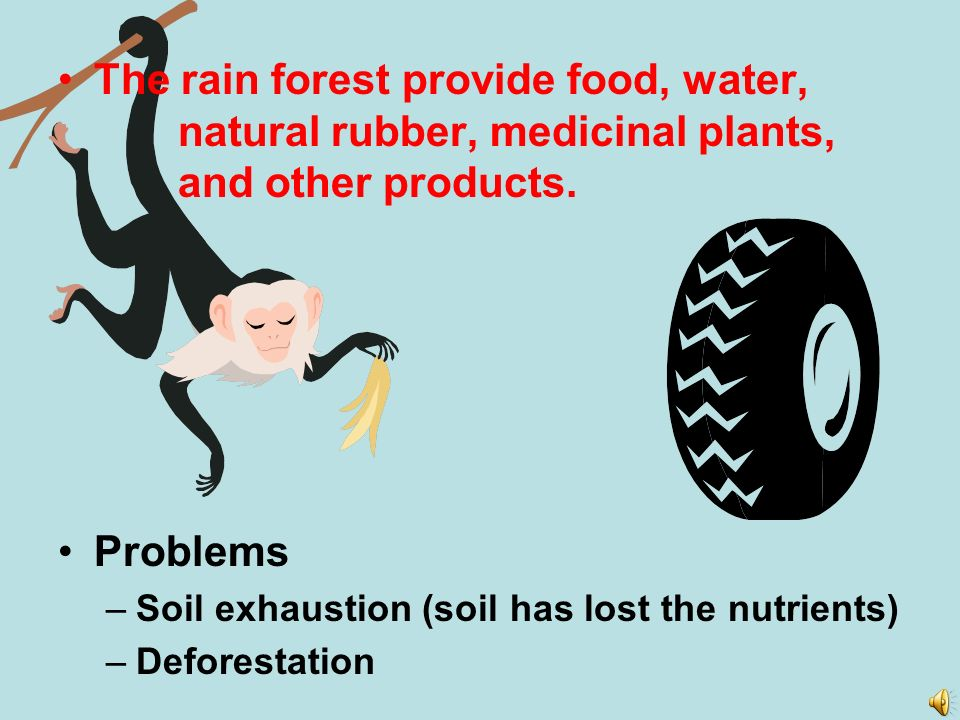 The rain forest provide food, water, natural rubber, medicinal plants, and other products.