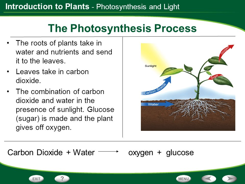 what is the process of photosynthesis Photosynthesis is the process by which plants and other things make food it is a chemical process that uses sunlight to turn carbon dioxide into sugars the cell can use as energy as well as plants, many kinds of algae, protists and bacteria use it to get food.