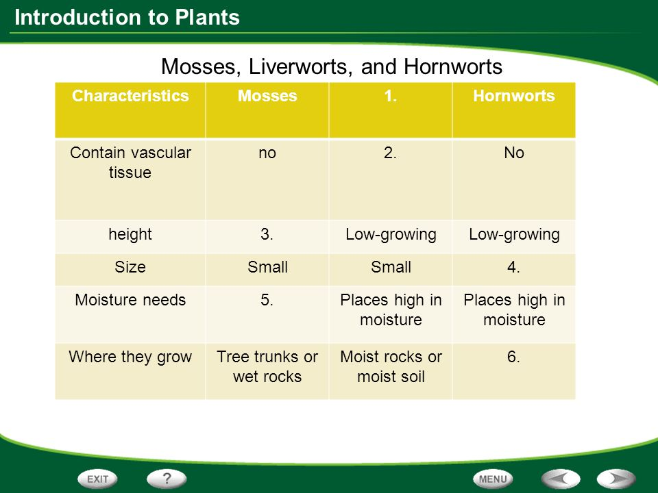 a study on the reproductive structures and characteristics of liveworts mosses and hornworts Bio 1202 test 3 study play which of the following characteristics do mosses, liverworts  which structure is common to both gymnosperms and angiosperms.