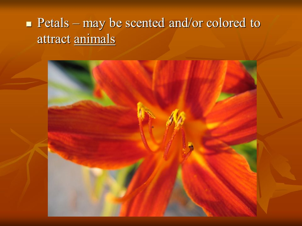Petals – may be scented and/or colored to attract animals