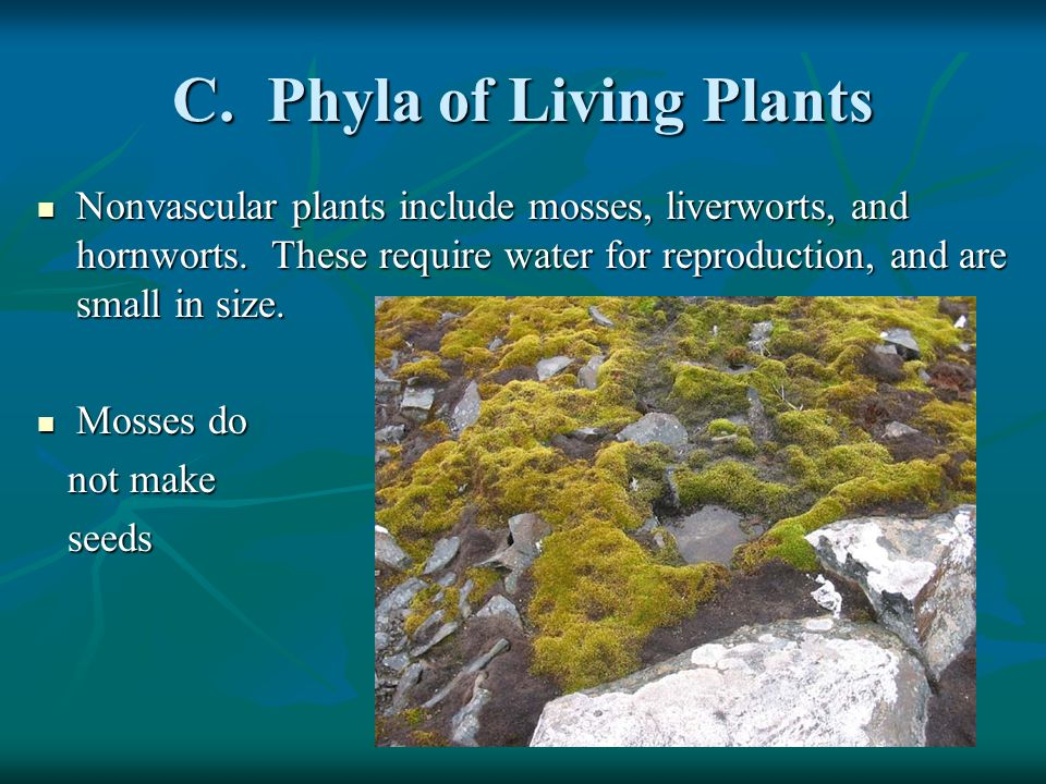 C. Phyla of Living Plants
