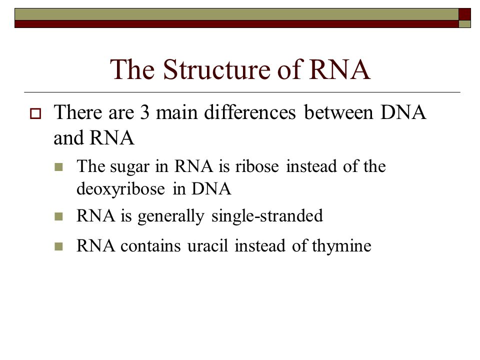 the difference between dna and rna Start studying dna vs rna differences learn vocabulary, terms, and more with flashcards, games, and other study tools.