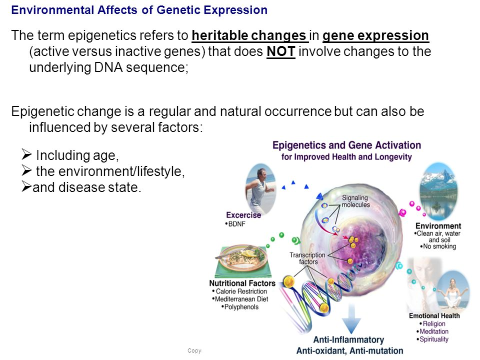 Environmental Affects of Genetic Expression
