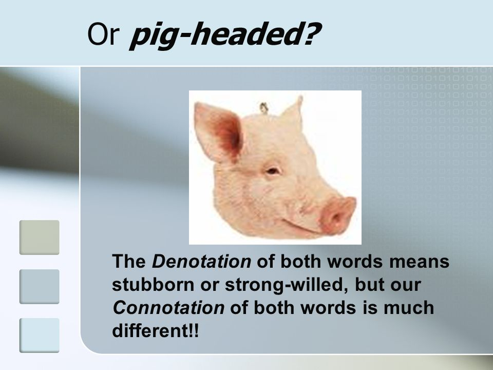 Or pig-headed.
