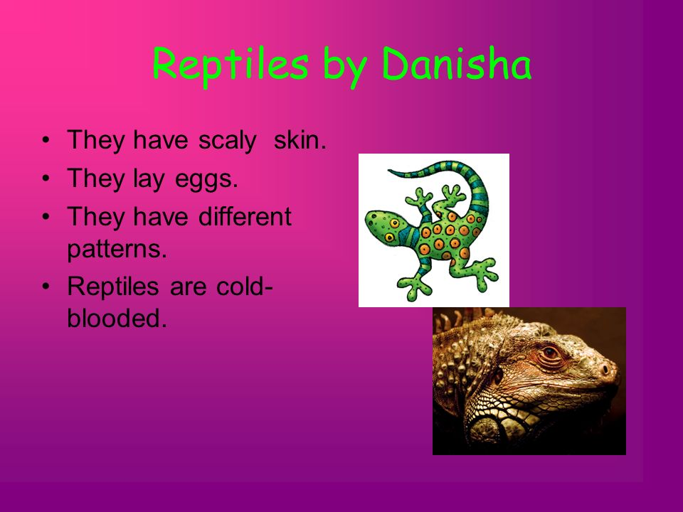 Reptiles by Danisha They have scaly skin. They lay eggs.
