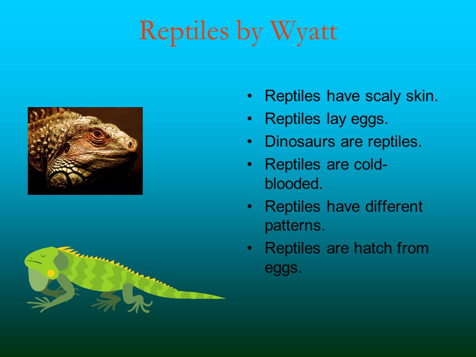 Reptiles by Wyatt Reptiles have scaly skin. Reptiles lay eggs.