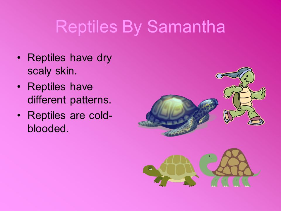 Reptiles By Samantha Reptiles have dry scaly skin.