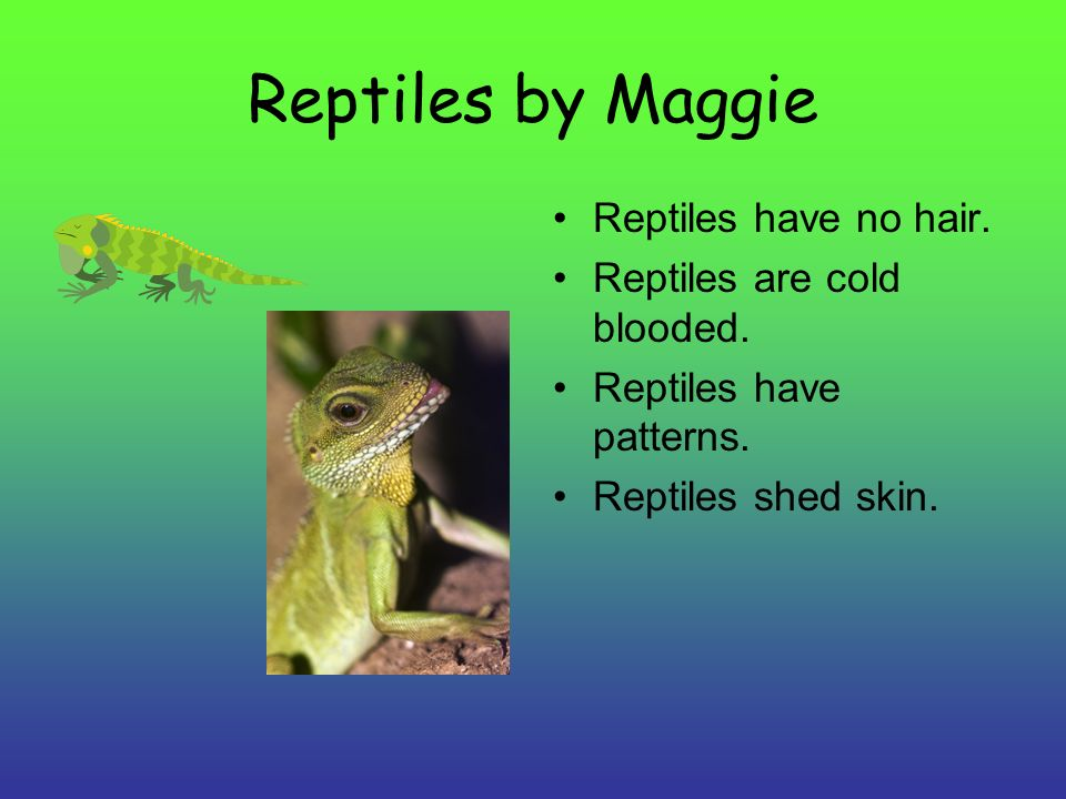 Reptiles by Maggie Reptiles have no hair. Reptiles are cold blooded.