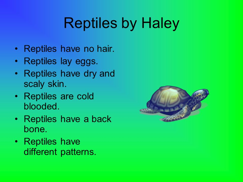 Reptiles by Haley Reptiles have no hair. Reptiles lay eggs.