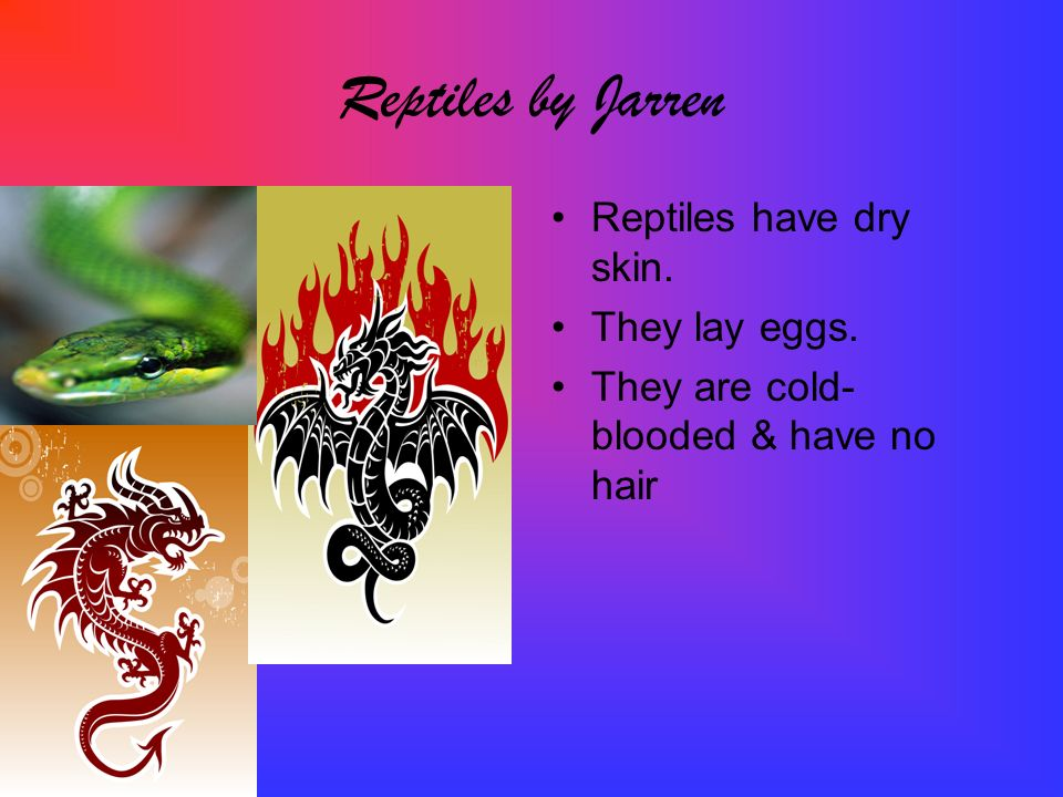 Reptiles by Jarren Reptiles have dry skin. They lay eggs.