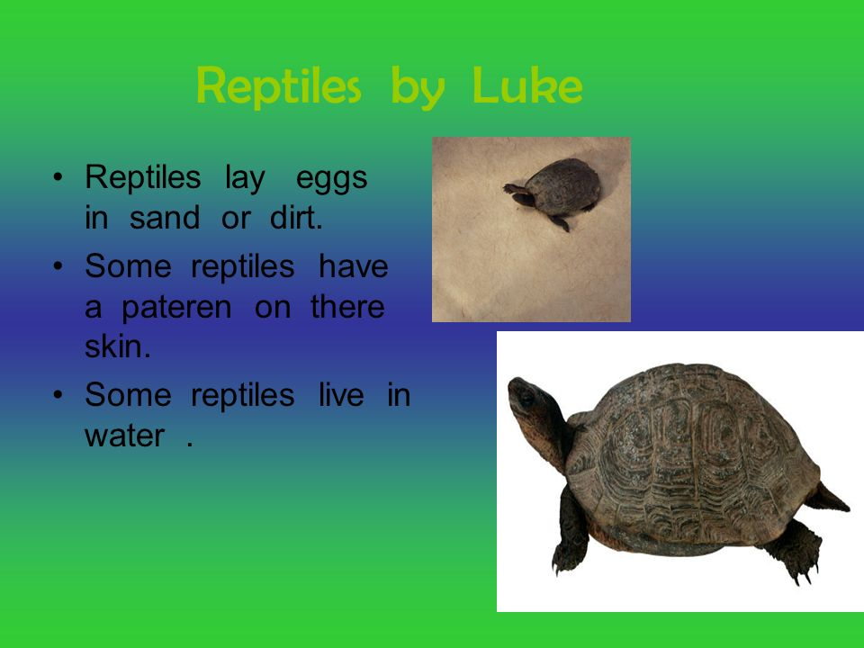Reptiles by Luke Reptiles lay eggs in sand or dirt.