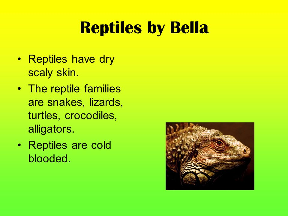 Reptiles by Bella Reptiles have dry scaly skin.
