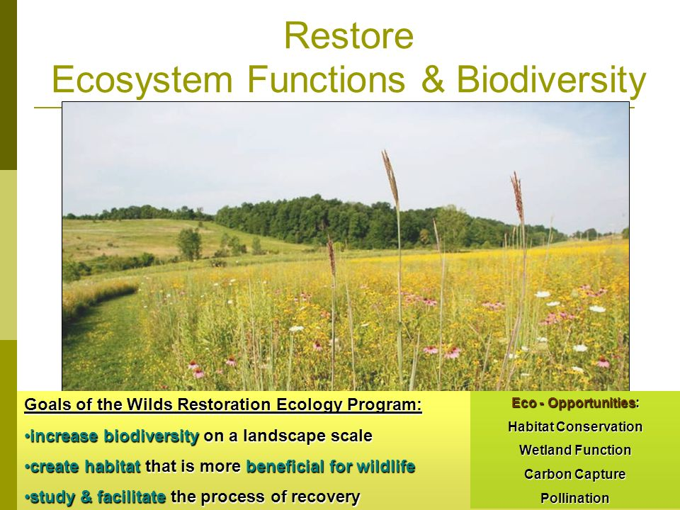 Restore Ecosystem Functions & Biodiversity