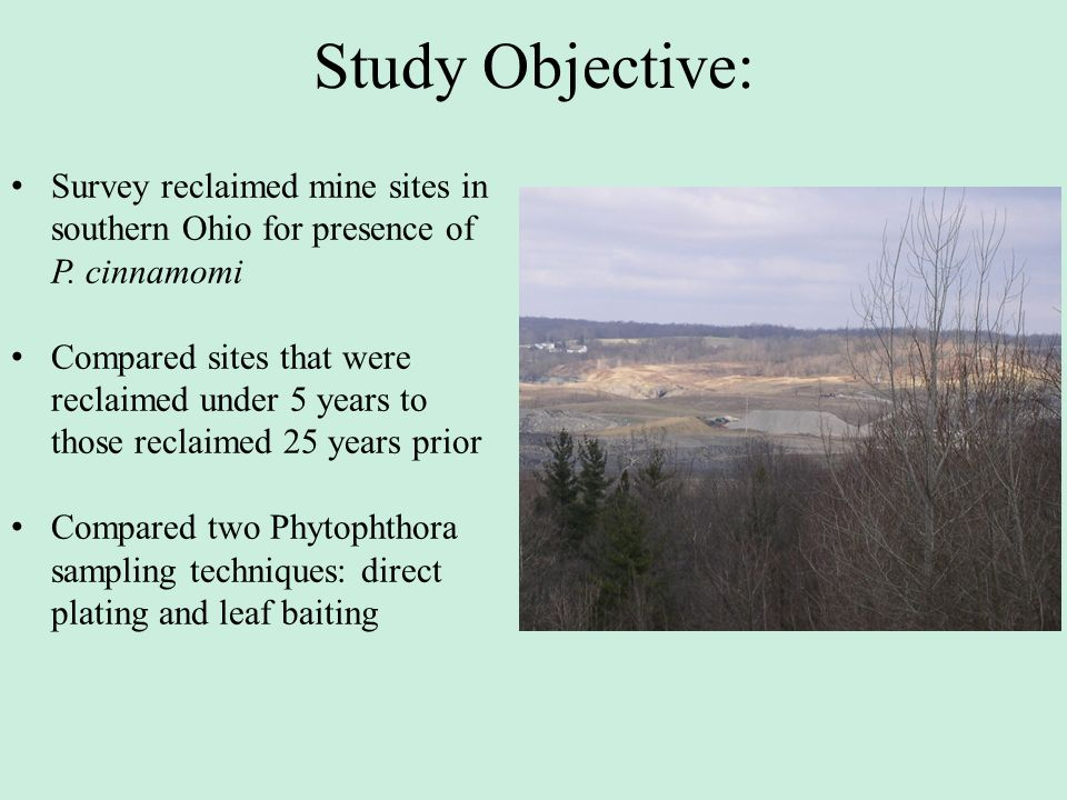 Study Objective: Survey reclaimed mine sites in southern Ohio for presence of P. cinnamomi.