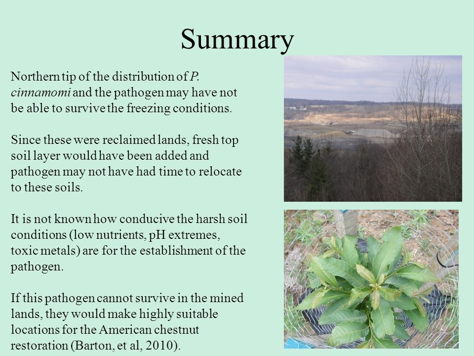 Summary Northern tip of the distribution of P. cinnamomi and the pathogen may have not be able to survive the freezing conditions.