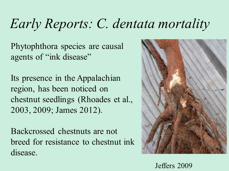 Early Reports: C. dentata mortality