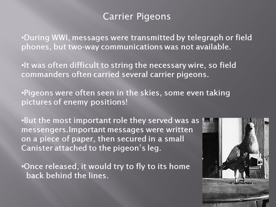 Carrier Pigeons During WWI, messages were transmitted by telegraph or field phones, but two-way communications was not available.