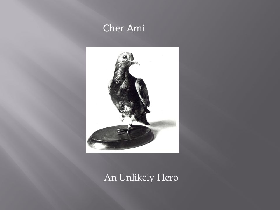 Cher Ami An Unlikely Hero