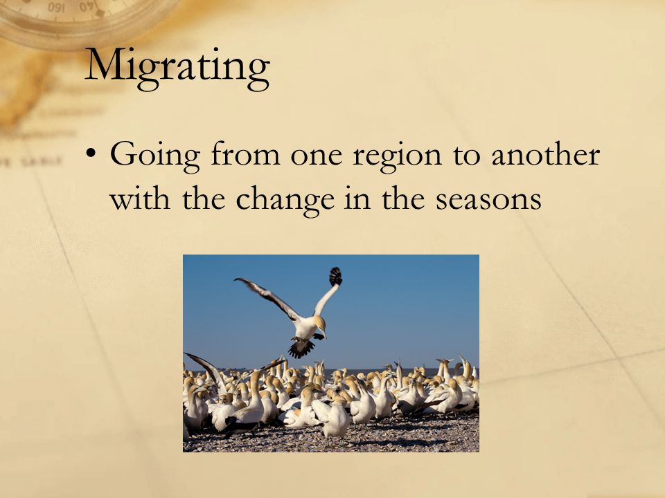 Migrating Going from one region to another with the change in the seasons