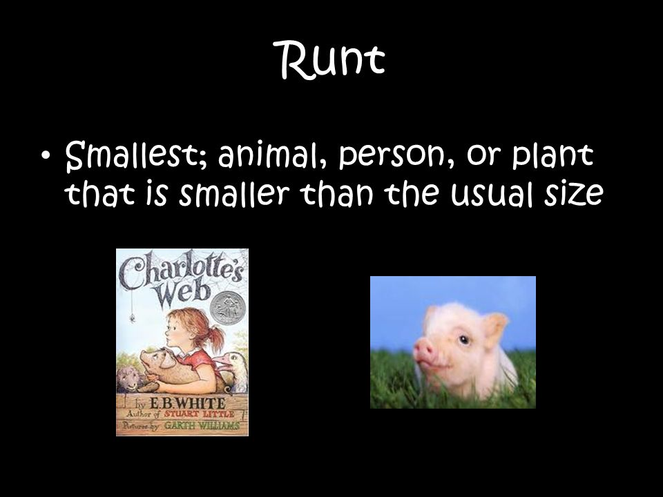 Runt Smallest; animal, person, or plant that is smaller than the usual size
