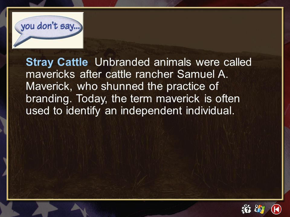 Stray Cattle Unbranded animals were called mavericks after cattle rancher Samuel A. Maverick, who shunned the practice of branding. Today, the term maverick is often used to identify an independent individual.