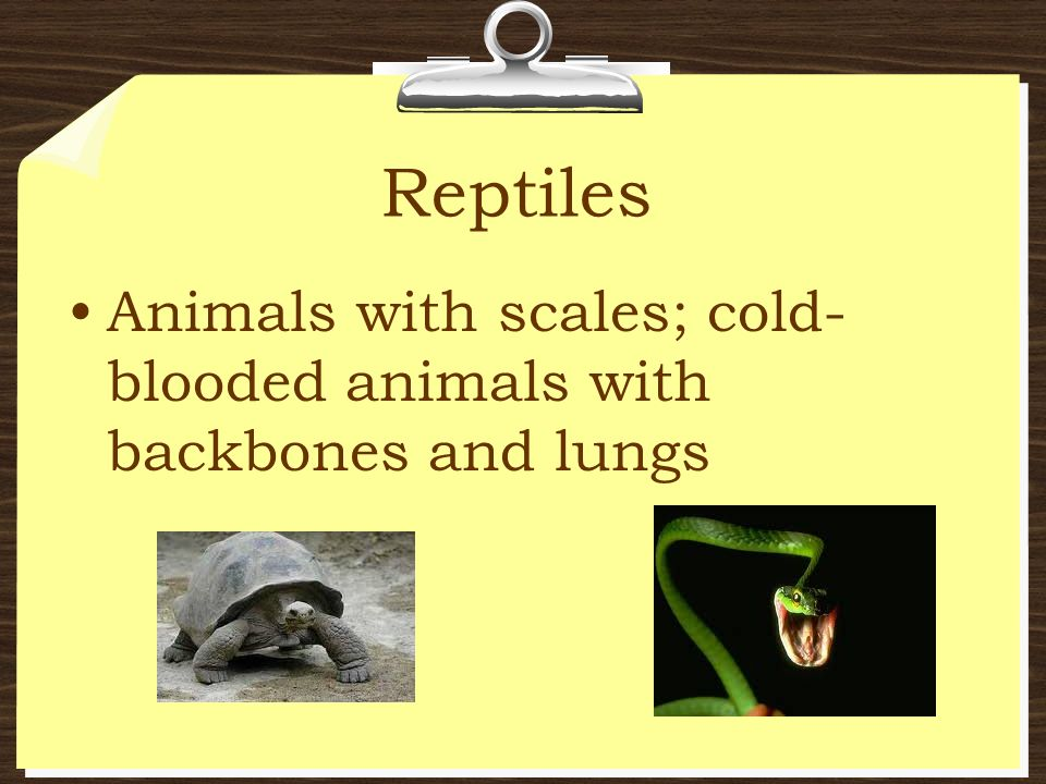 Reptiles Animals with scales; cold-blooded animals with backbones and lungs