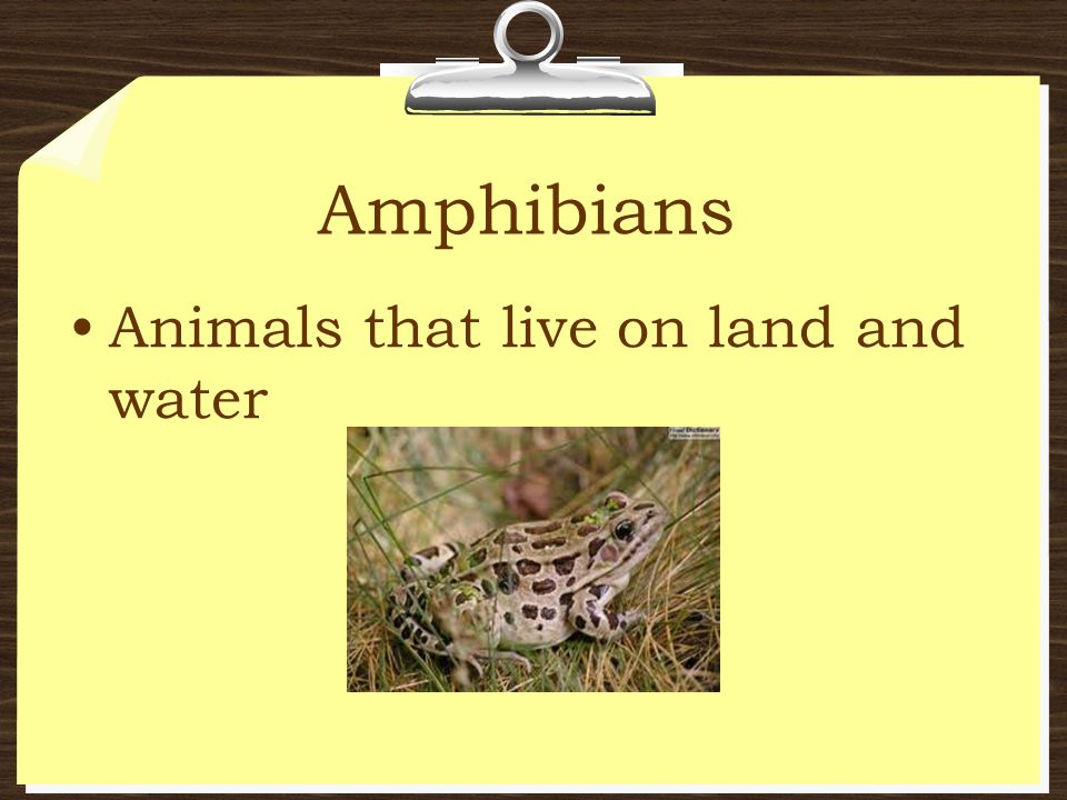 Amphibians Animals that live on land and water
