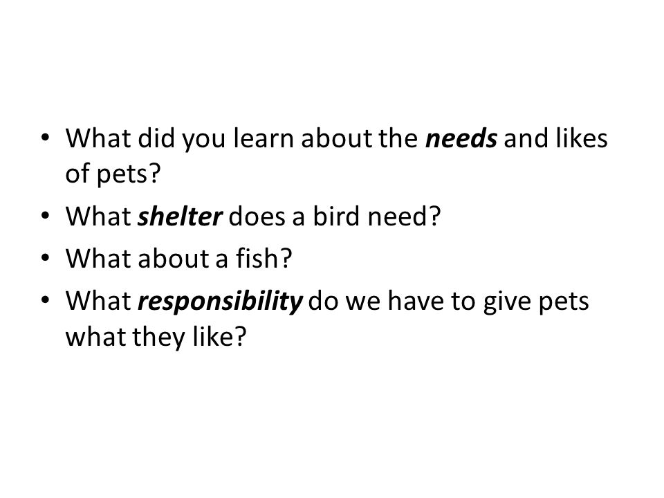 What did you learn about the needs and likes of pets