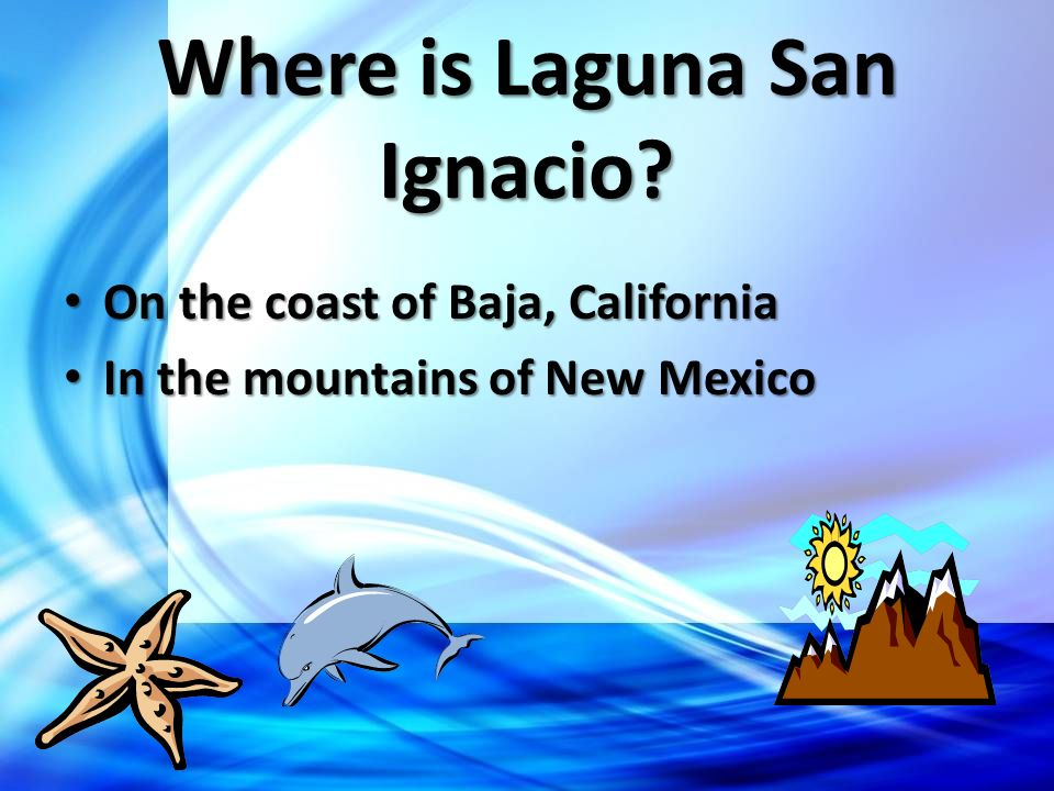 Where is Laguna San Ignacio