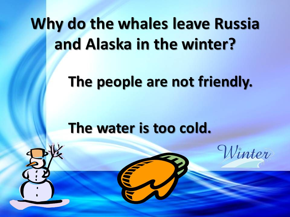 Why do the whales leave Russia and Alaska in the winter