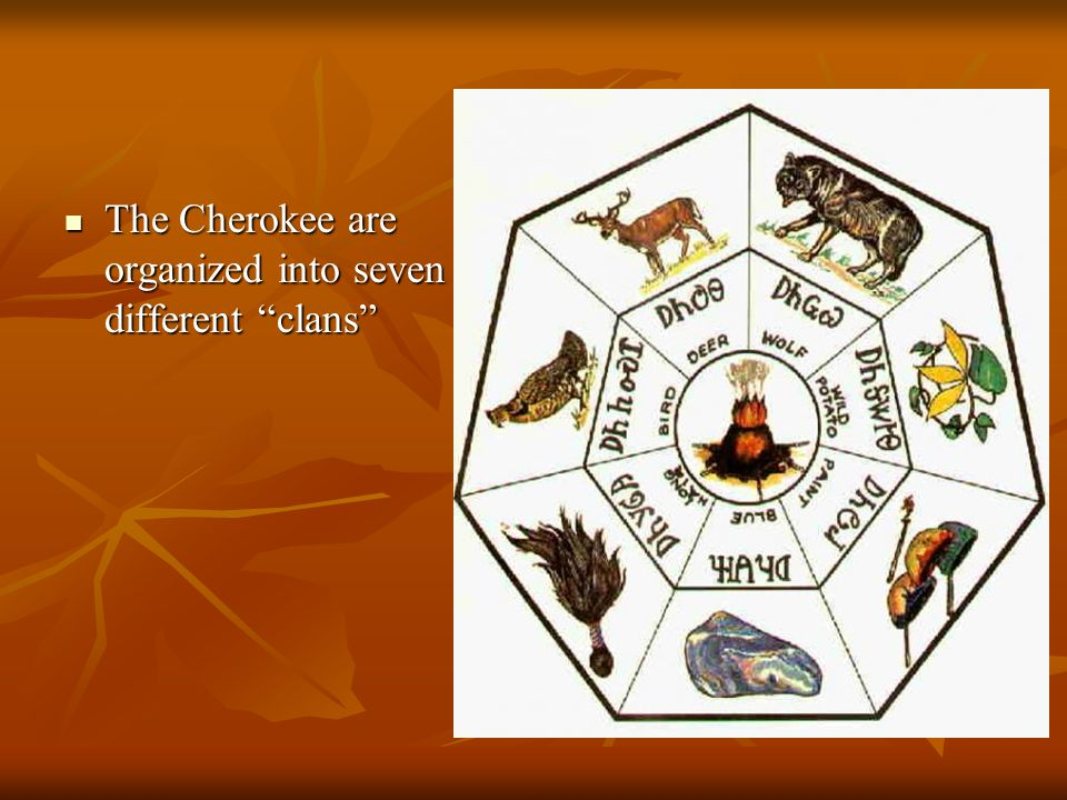 The Cherokee are organized into seven different clans