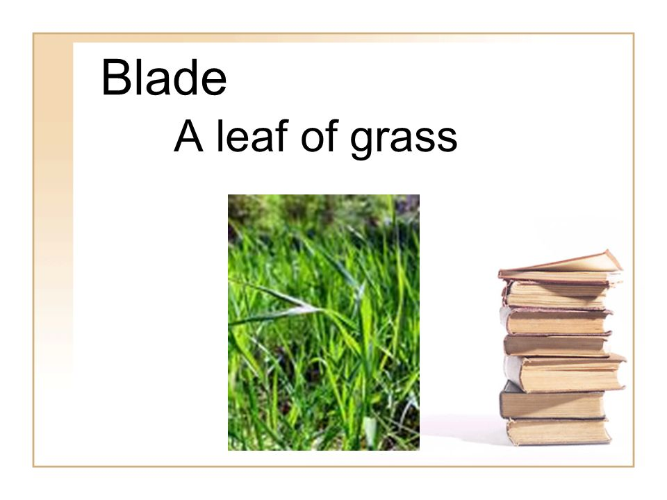Blade A leaf of grass