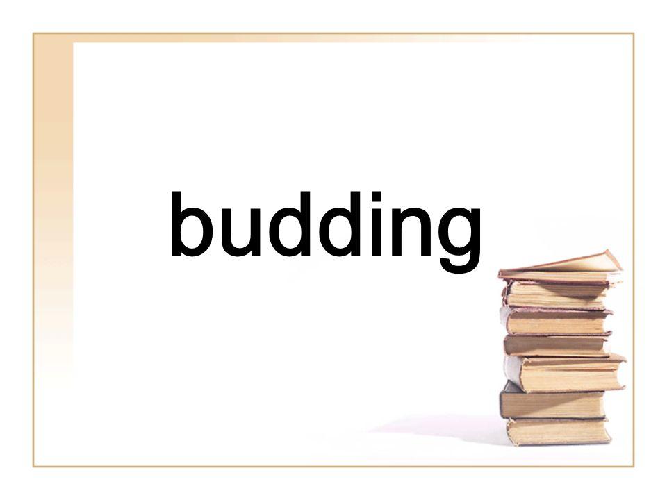 budding