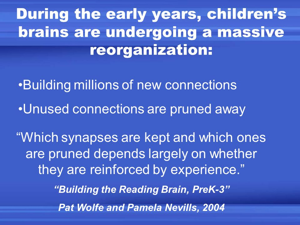 During the early years, children's brains are undergoing a massive reorganization: