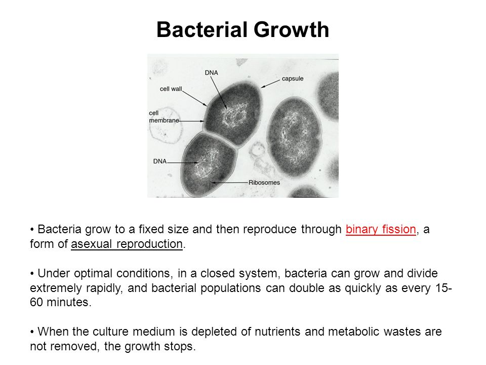 Bacterial Growth Curve - ppt video online download