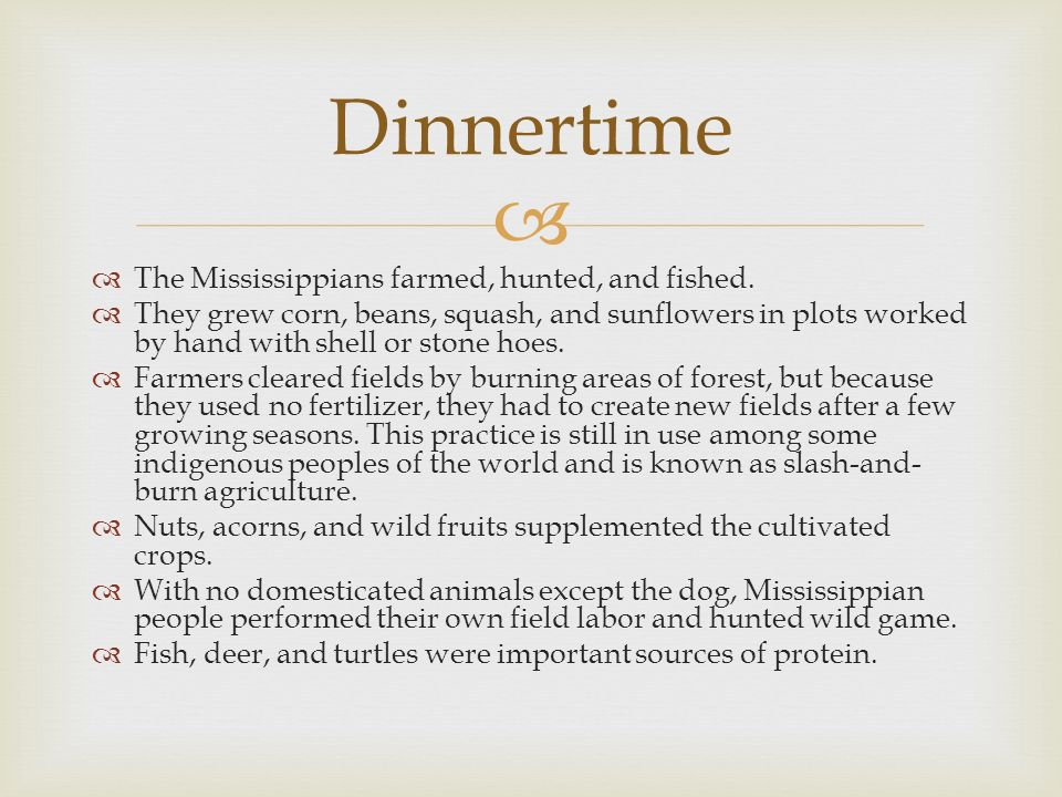 Dinnertime The Mississippians farmed, hunted, and fished.