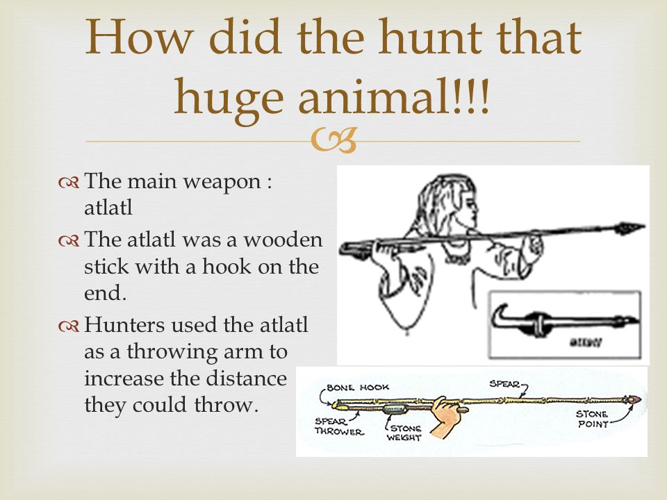 How did the hunt that huge animal!!!