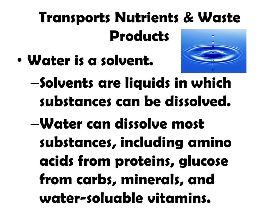 Transports Nutrients & Waste Products