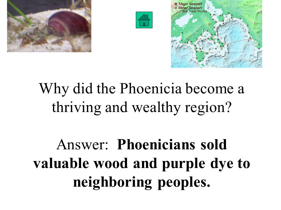 Why did the Phoenicia become a thriving and wealthy region