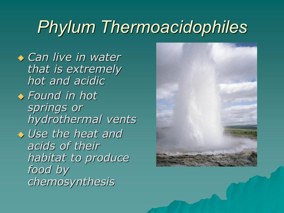 hot vent chemosynthesis equation Video: chemosynthesis: definition & equation this lesson introduces the concept of chemosynthesis it explains that energy is necessary for all life and provides a description of the chemosynthetic process.