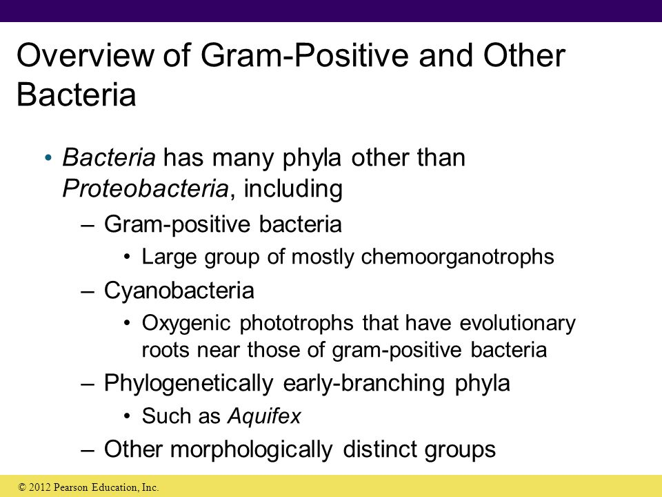 an overview of bacteria Bacteria overview abstract the nomenclature of bacteria is complex human pathogenic bacteria are classified according to their form ( cocci , bacilli , or coccobacilli ) and gram staining properties ( gram‑positive , gram‑negative , and atypica.