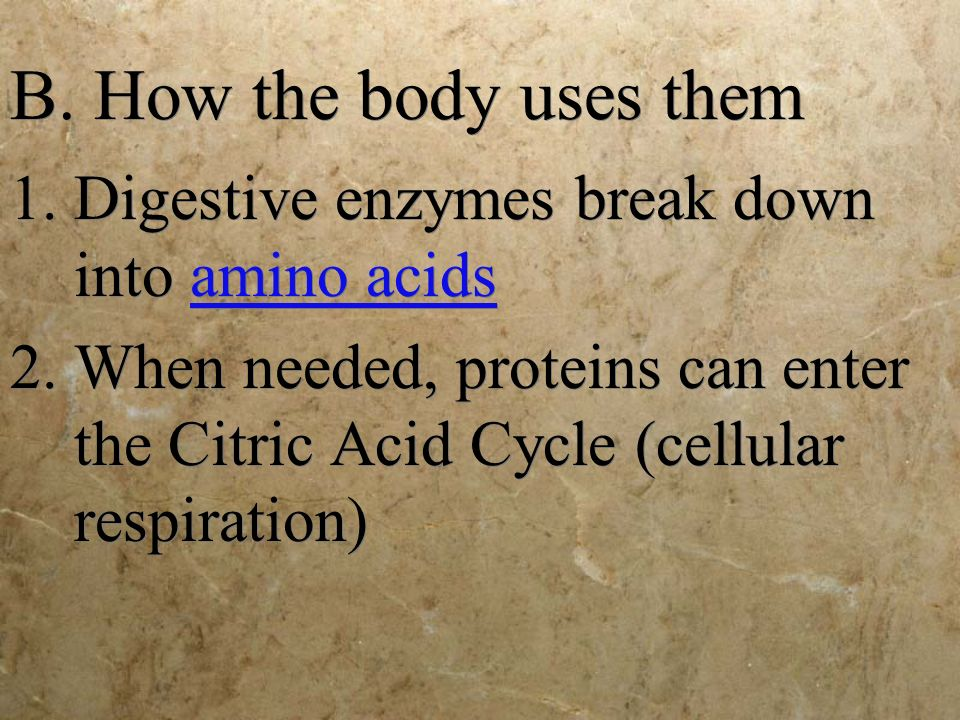 B. How the body uses them Digestive enzymes break down into amino acids.