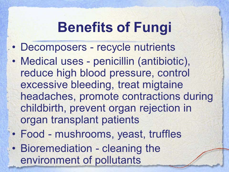 Benefits of Fungi Decomposers - recycle nutrients