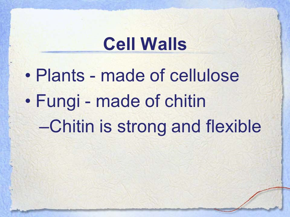 Cell Walls Plants - made of cellulose Fungi - made of chitin Chitin is strong and flexible