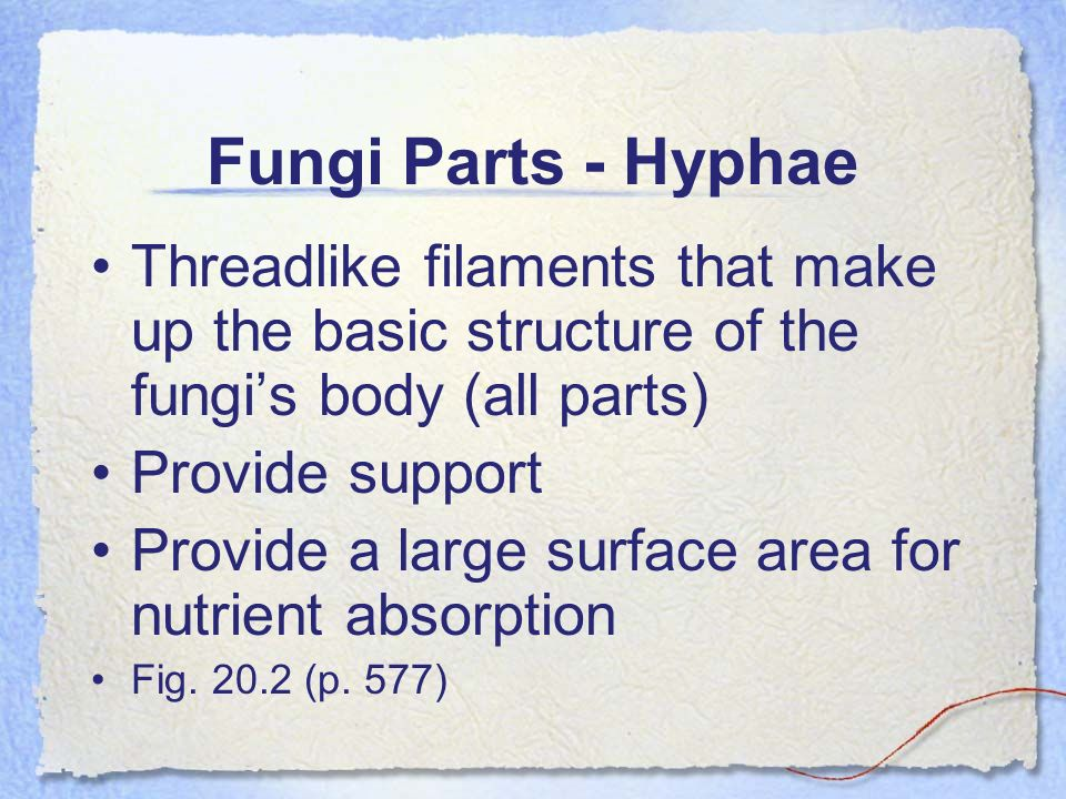 Fungi Parts - Hyphae Threadlike filaments that make up the basic structure of the fungi's body (all parts)